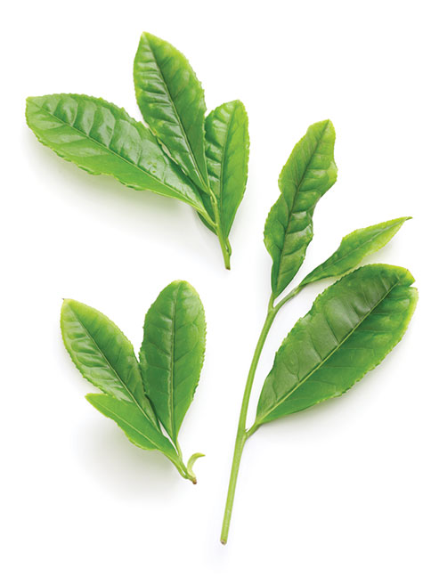 grean tea leaves